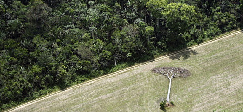 A fallen castanha tree lies in a soy field cleared from Amazon rainforest outside of Santarem, Brazil.