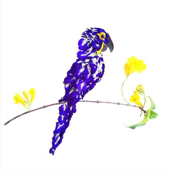 2016-10-11-00_15_08-creative-art-on-instagram_-the-blue-and-gorgeous-hyacinth-macaw-made-of-ipomoea