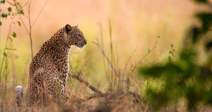2015-03-09 22_27_07-Morkel Erasmus Photography - Wildlife and Landscape photography from Africa and