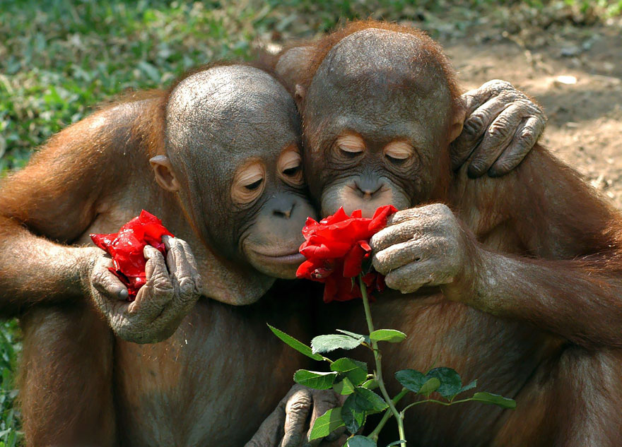 animals-smelling-flowers-37__880