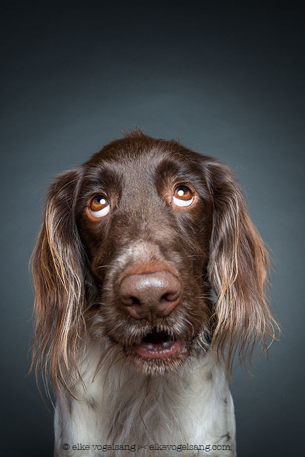 dogs-questioning-the-photographers-sanity-10__605