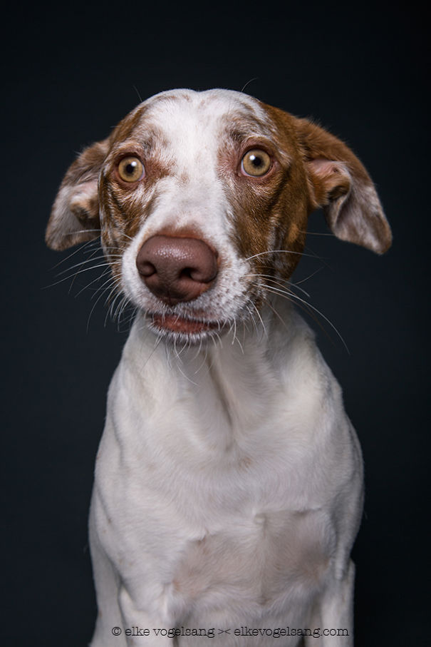 dogs-questioning-the-photographers-sanity-3__605