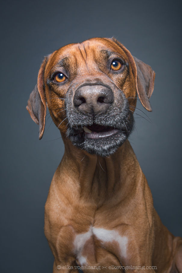 dogs-questioning-the-photographers-sanity-7__605
