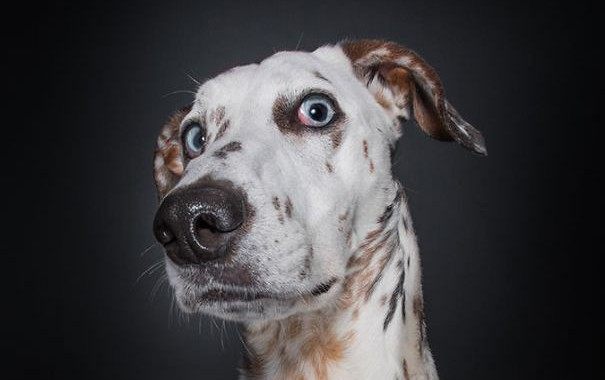 dogs-questioning-the-photographers-sanity__605-0