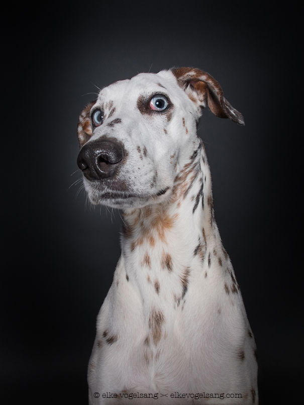dogs-questioning-the-photographers-sanity__605