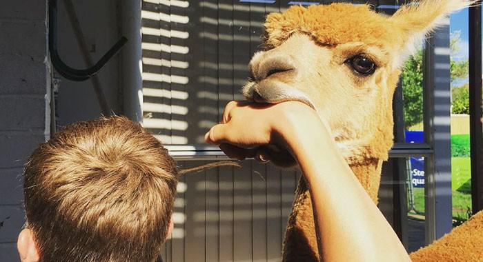pet-alpaca-chewy-chewpaca-matt-24