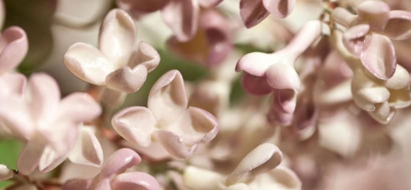 the-ukrainian-man-who-grows-porcelain-flowers-12__880
