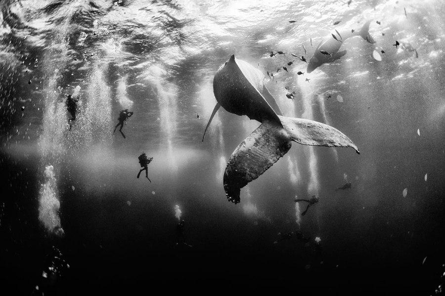01-grand-prize-© Anuar Patjane Floriuk