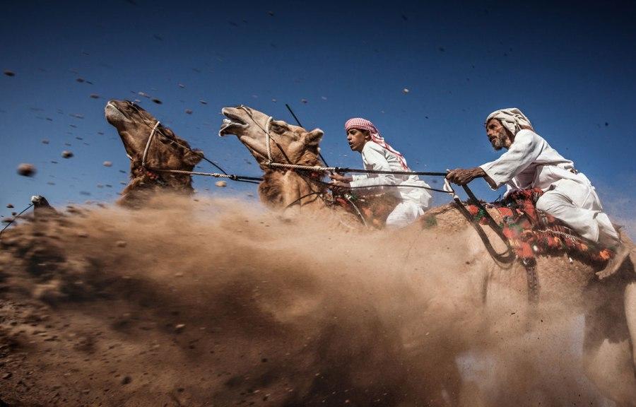 03-third-place-© Ahmed Al Toqi-Camel Ardah