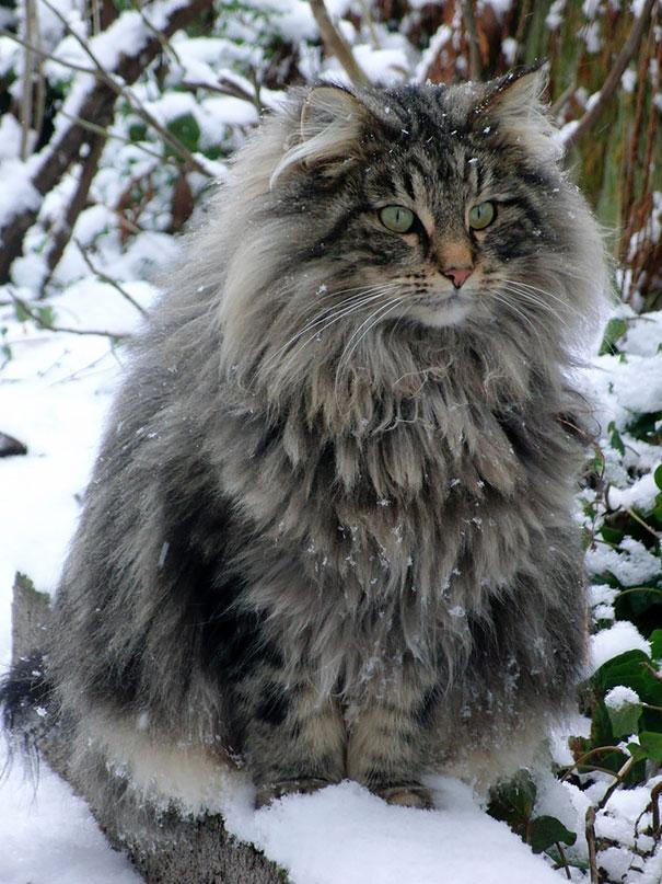 huge-cats-19__605