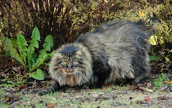 huge-cats-23__605