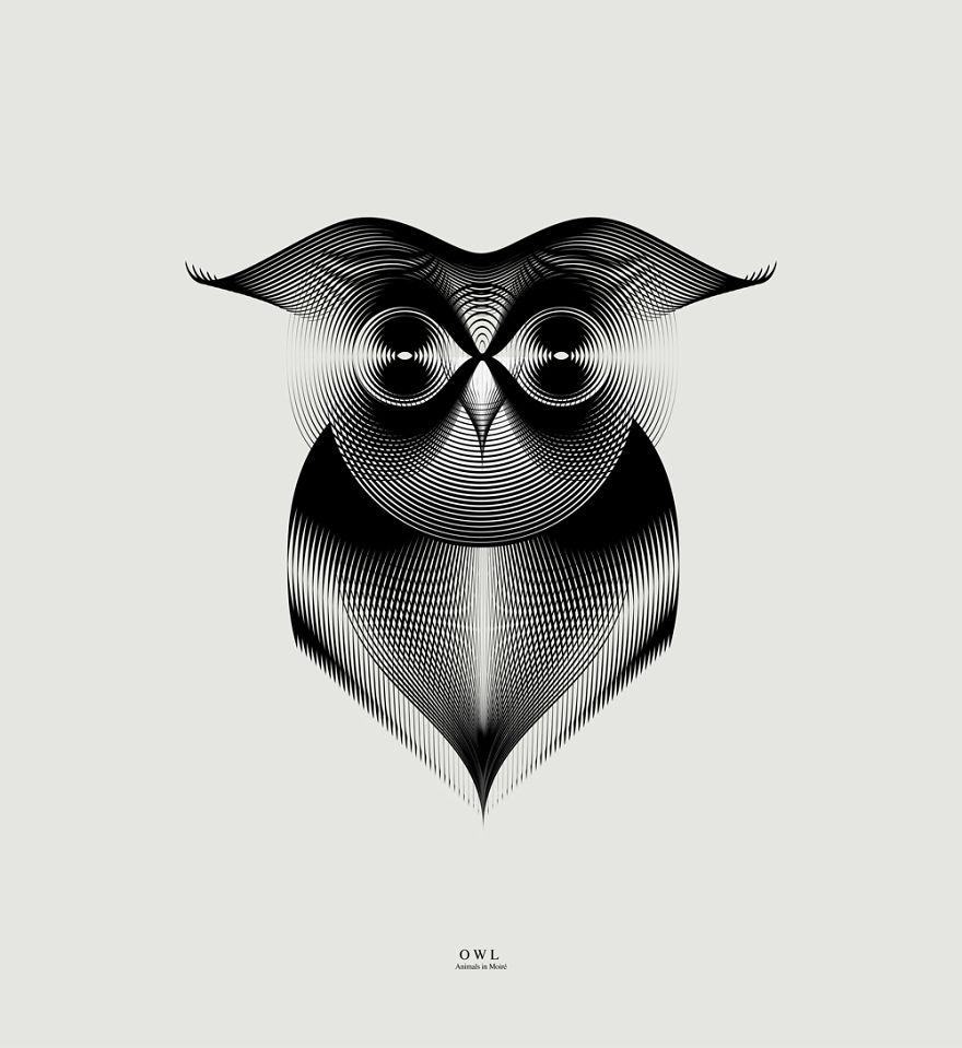 owl_ok__880