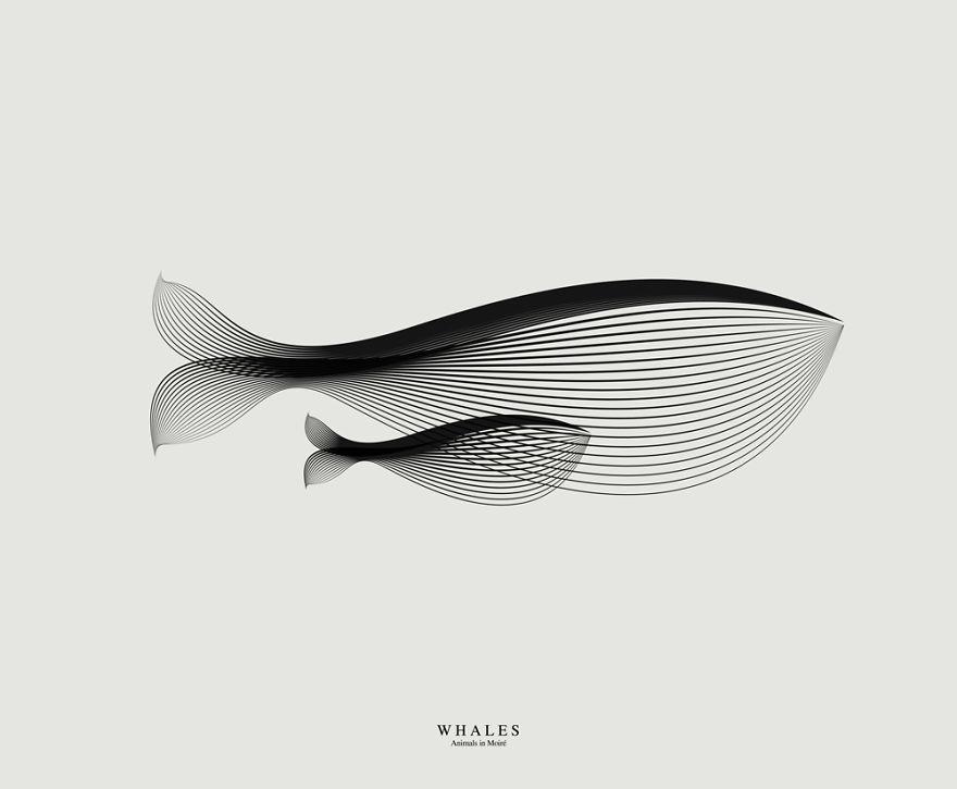 whales_ok__880